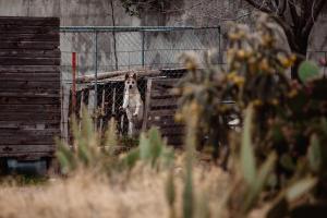 Marfa Texas Photos-055