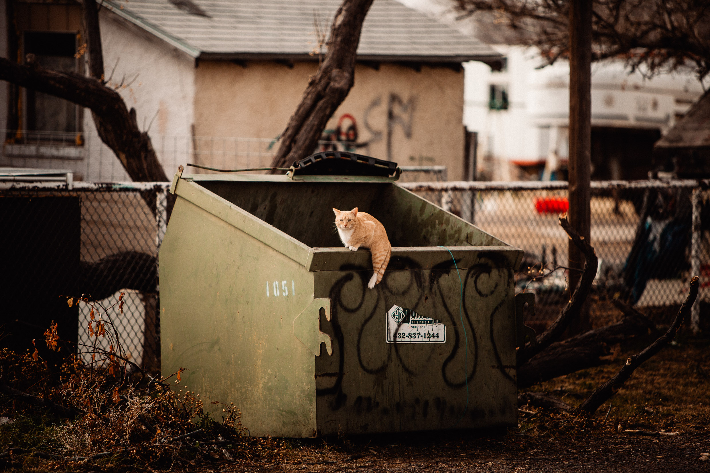 marfa texas cat