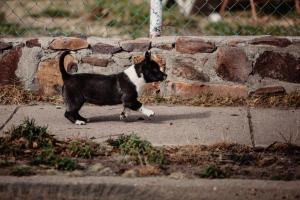 Marfa Texas Photos-060